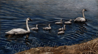 Trumpeter Swan Painting in Pastel by Wildlife Artist Colette Theriault