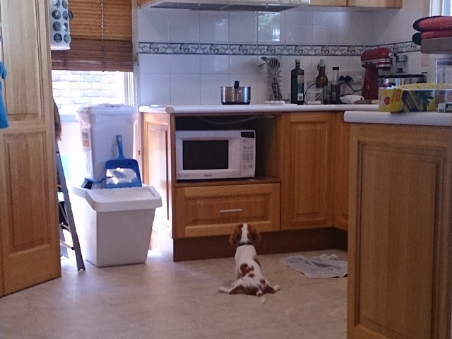 a tiny puppy sits, legs splayed, in front of the microwave on the kitchen floor.