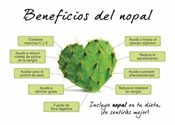 Fichas de plantas medicinales y tiles chumbera o nopal - Informacion sobre los cactus ...