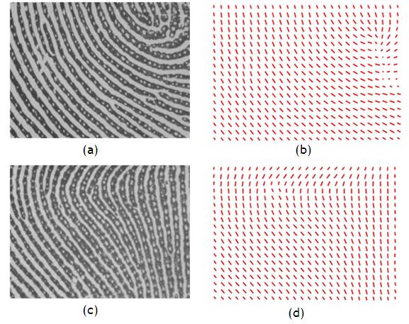Image Processing with Matlab: Ridge Orientation