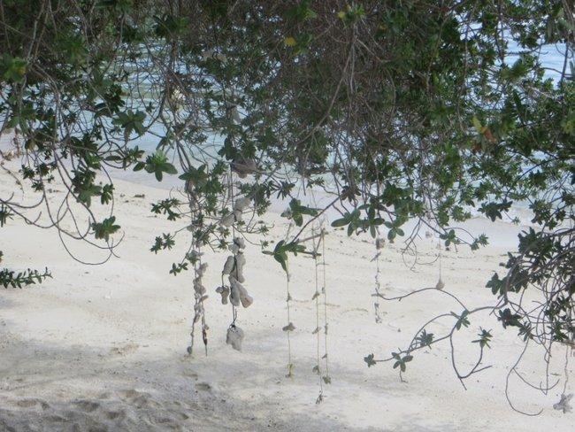 ракушки на веревочках весят на ветках
