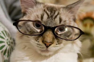 chats à lunettes
