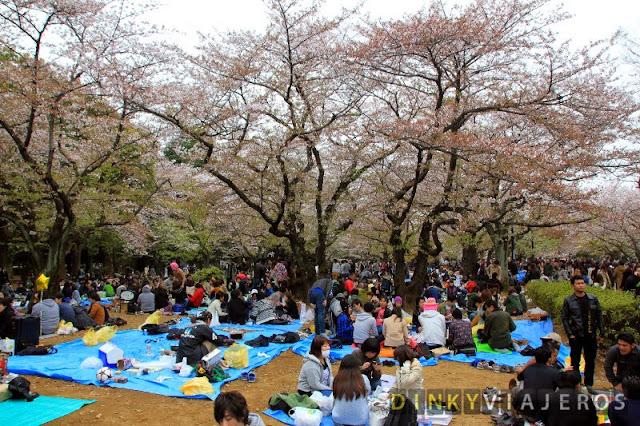 Jóvenes celebrando el hanami en el Parque Yoyogi