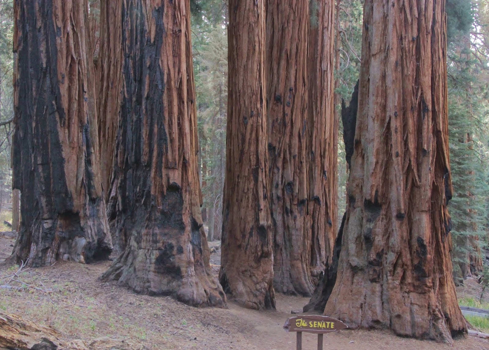 The Senate Giant Sequoia Trees