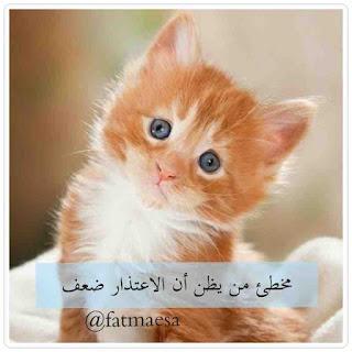 صور صباح الخير | Good morning pictures