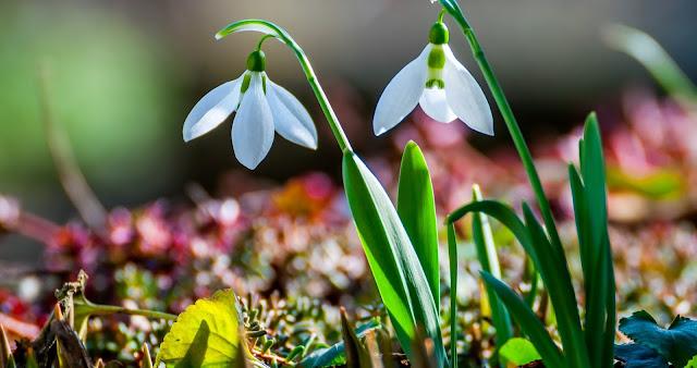Весенние приметы и суеверия, Крестьянские поговорки о весне, Приметы весны о лете, весна, весенние приметы, приметы и суеверия, приметы о весне, приметы народные, мудрость народная, приметы весны о лете, поверья народные, календарь народный, снег весной, погода весной, про весну, про весенние месяцы, про календарь, про апрель, про май, про март, март, апрель, май, приметы на март, приметы на апрель, приметы на май, приметы народные, календарь народный, календарь примет, http://prazdnichnymir.ru/,Весенний народный календарь, Весенние приметы и суеверия, Крестьянские поговорки о весне, Приметы весны о лете, весна, весенние приметы, приметы и суеверия, приметы о весне, приметы народные, мудрость народная, приметы весны о лете, поверья народные, календарь народный, снег весной, погода весной, про весну, про весенние месяцы, про календарь, про апрель, про май, про март, март, апрель, май, приметы на март, приметы на апрель, приметы на май, приметы народные, календарь народный, календарь примет, http://prazdnichnymir.ru/,Весенний народный календарь,