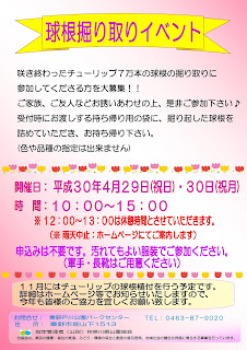 球根掘り取りイベント<4/29-30>