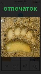 В сырой земле четко проявляется отпечаток большого зверя, который недавно здесь прошел