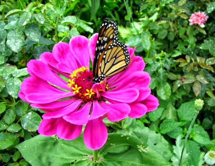 Attract Color What Butterflies Flowers