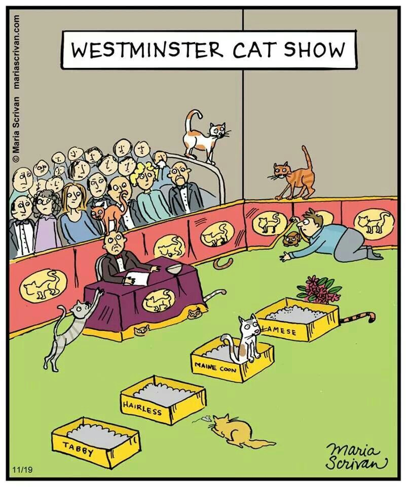 Mystery fanfare cartoon of the day westminster cat show - Cat cartoon shows ...