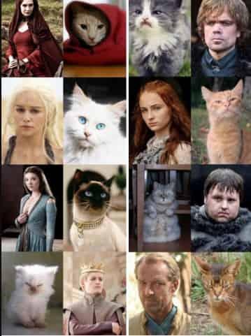 Typo Cast #gameofthrone jadi Cats #gamesofthrone