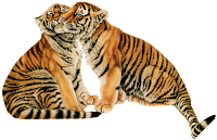 Tigre png
