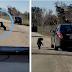 Ce chien poursuit désespérément la voiture de son maître après avoir été abandonné