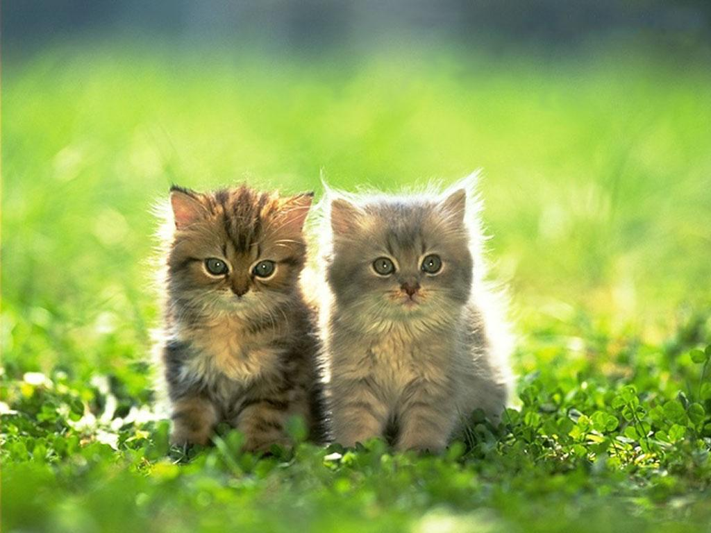 SUN SHINES: Beautifull Cute Kitten Images