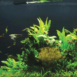 aneka desain aquascape terbaik