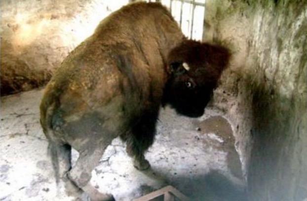 Zoo Neraka Paling Kejam Di Dunia Yang Terletak Di Indonesia