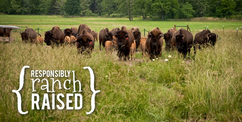 Responsibly Ranch Raised Bison Herd