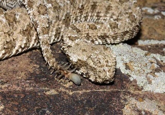 As 9 Cobras mais bizarras do mundo