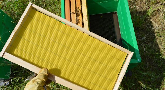 Χτίζοντας νέες κηρήθρες με τροφοδοσία: Πως εφαρμόζεται σωστά με καλό αποτέλεσμα;