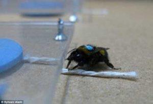 Νέα έρευνα αποδεικνύει ότι οι μέλισσες έχουν υψηλό επίπεδο νοημοσύνης!