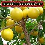 Abiu e seus excelentes benefícios à saúde