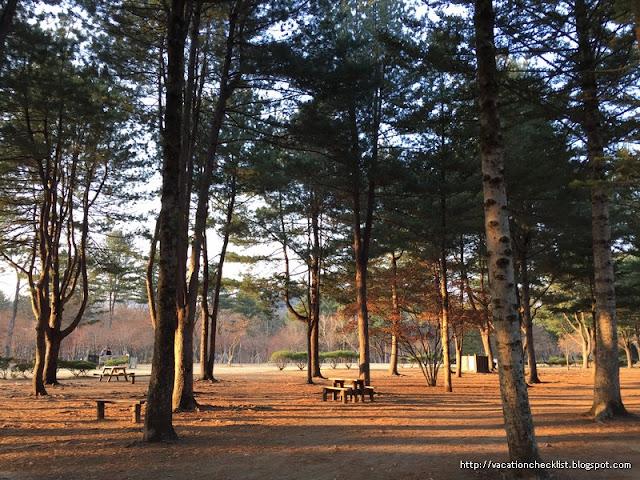 What to do in Nami Island South Korea