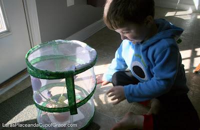 butterfly unit study, toddler homeschool, feeding butterflies