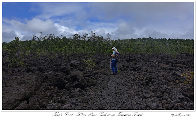 Naulu Trail: Where Lava Field meets Hawaiian Forest