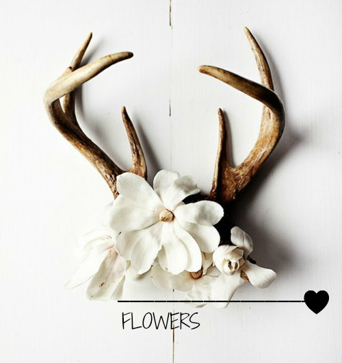 T D C Interior Styling Antlers