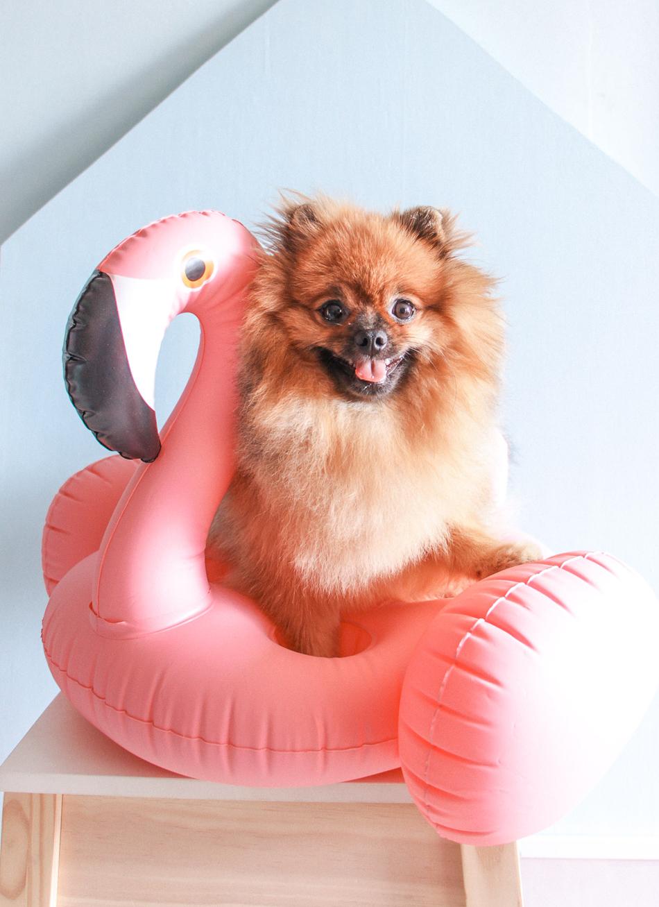 sushi cachorro de estimação blog do math
