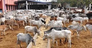 News: Eight herdsmen's cattle killed in Katsina