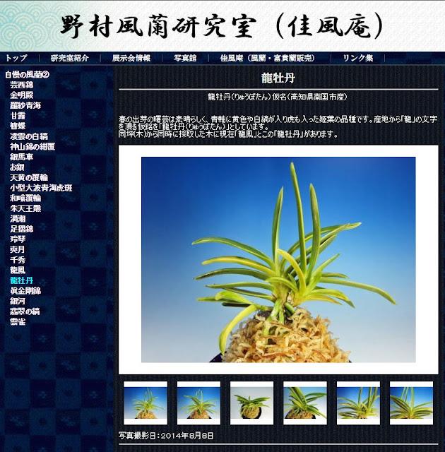 http://www.fuuran.jp/jiman_ryuubotan.html#%E9%BE%8D%E7%89%A1%E4%B8%B9%E3%81%AE%E8%A9%B3%E7%B4%B0