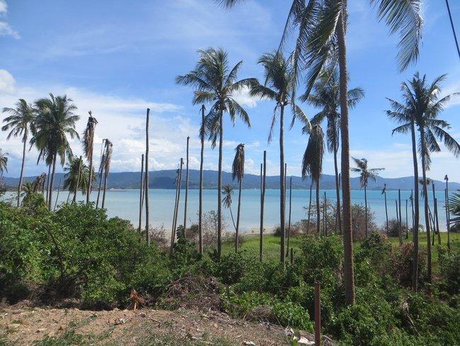 Старые пальмы остров Самуи