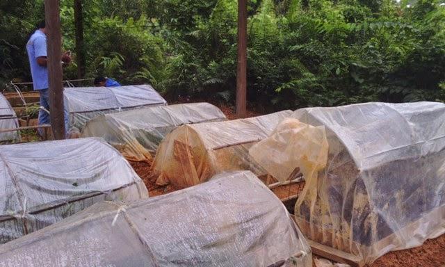 greenhouse,paranet,hidroponik,greenhouse hidroponik,proposal pembuatan green house,hidroponika,cara membuat rak dari baja ringan,contoh greenhouse,