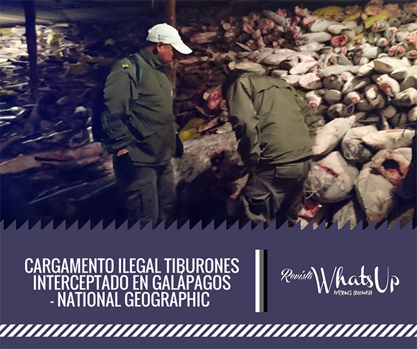 Cargamento-ilegal-tiburones-interceptado-Galápagos-National-Geographic