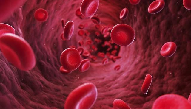 Ingin Menjaga Sirkulasi Darah Dalam Tubuh Tetap Lancar?, Coba Ikuti Tips-Tips Berikut