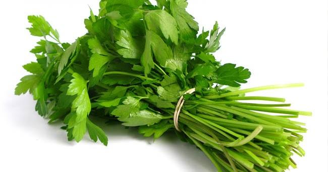 Descubre las propiedades digestivas del cilantro  Flores de Venezuela