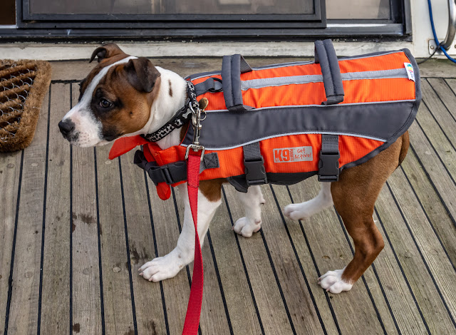 Photo of Ruby wearing her lifejacket on Ravensdale's aft deck