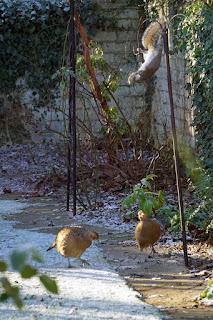 wildlife, birds, squirrels, pheasants,