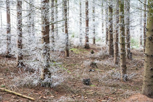 Der Frost im Wald