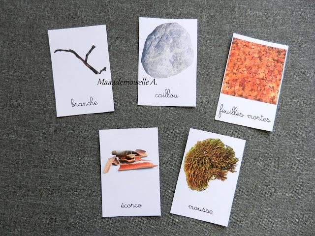|| Mise à jour des cartes de nomenclature - Trésors d'automne