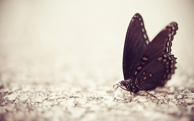 Butterfly backgrounds 2