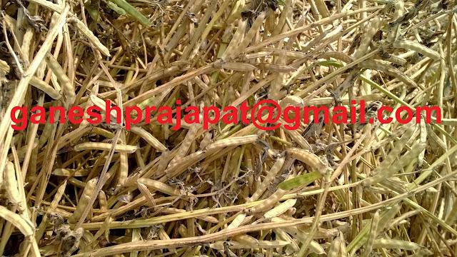 Demand of Guar gum for oil drilling in USA is increasing, Guar, guar gum, Guar gum price, Guar gum export,  guar gum news, NCDEX guar gum price, Guar gum report, guar seed production, guar gum consultant, guar seed export, guar gum export from india 2017-2018 , guar, guar gum, guar gum news, Guar gum export-2017-2018, Guar gum export-from India during 2017-2018, Guar gum export data -2017-2018, Guar gum rate , NCDEX guar gum price,  guar gum export-2017, guar gum export-2018, guar gum demand-2017, guar gum demand-2018, guar gum production, guar gum cultivation, guar gum cultivation consultancy, Guar, guar gum, guar price, guar gum price, guar demand, guar gum demand guar seed production, guar seed stock, guar seed consumption, guar gum cultivation, guar gum cultivation in india, Guar gum farming, guar gum export from india, Fundamentally Guar seed and guar gum are very strong , Guar, guar gum, guar price, guar gum price, guar demand, guar gum demand, guar seed production, guar seed stock, guar seed consumption, guar gum cultivation, guar gum cultivation in india, Guar gum farming, guar gum export from india , guar seed export, guar gum export, guar gum farming, guar gum cultivation consultancy, today guar price, today guar gum price, ग्वार, ग्वार गम, ग्वार मांग, ग्वार गम निर्यात 2018-2019, ग्वार गम निर्यात -2019, ग्वार उत्पादन, ग्वार कीमत, ग्वार गम मांग, Guar Gum