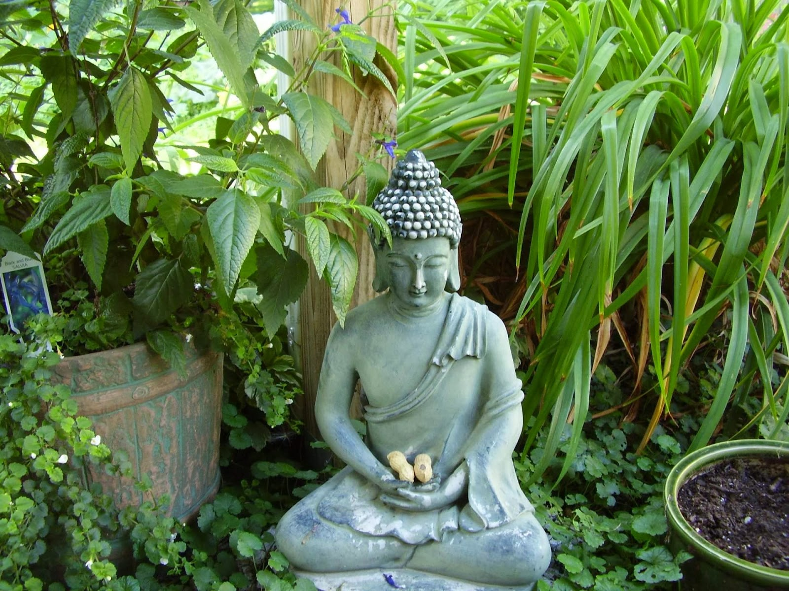 Zen Garden Ideas Quotations Pictures Quotes Image Buddha Wishes Quotes