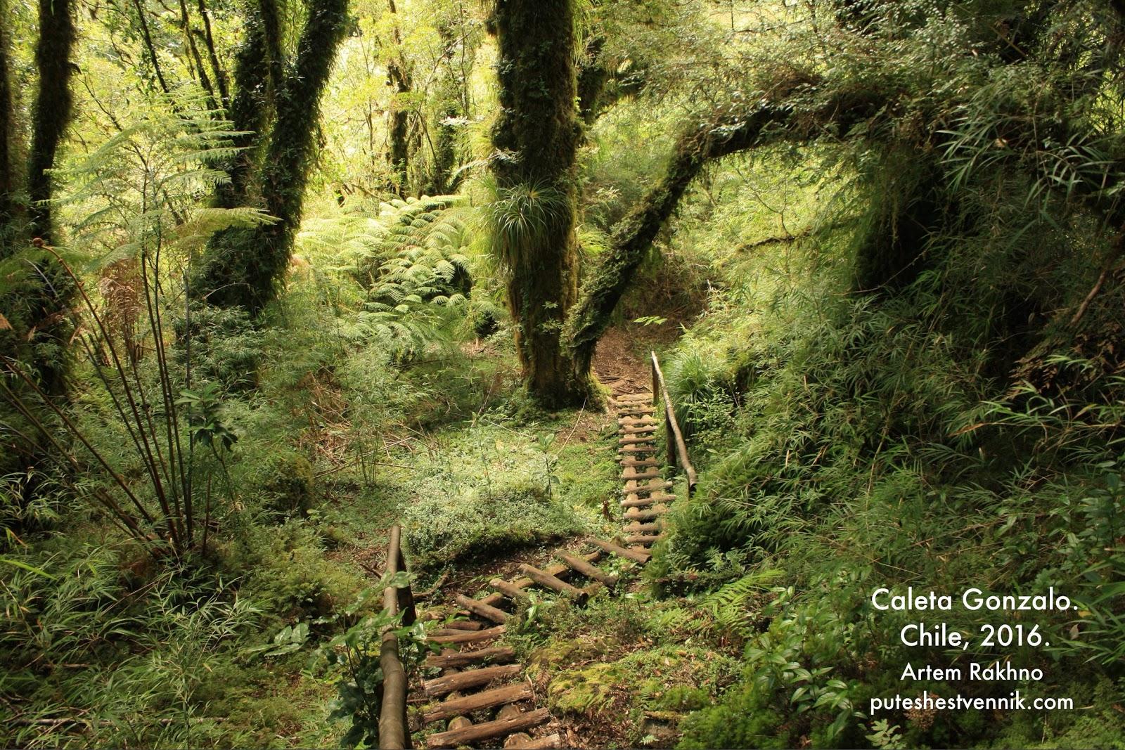 Деревянный трап в лесу парка Пумалин