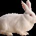 Sukses  Ternak Kelinci dengan Modal 500 rb