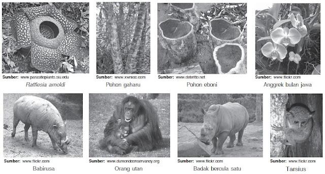 Macam-macam Jenis Tumbuhan dan Hewan Langka di Indonesia beserta Asalnya