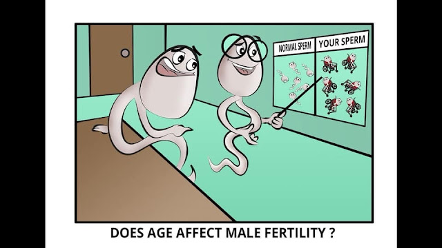 Fertiliteti