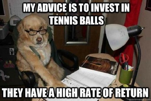 Funny Dog Tennis Ball Financial Advice Picture