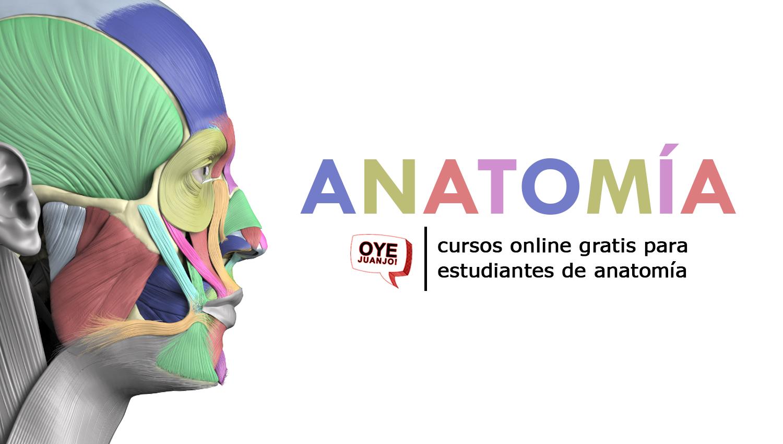 Cursos online gratis para estudiantes de Anatomía | Oye Juanjo!